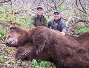 Costal brown bear